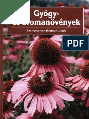 Homoktövis, a csodanövény - HáziPatika