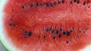 otthoni pikkelysömör kezelése a könyökön vörös foltok a testen viszketnek és különböző helyeken jelennek meg
